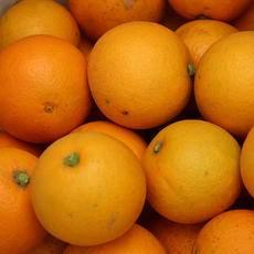 父愛如橙子 麻陽高山冰糖橙5斤普通裝
